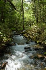 20160527 Kamikochi 7 (BONGURI) Tags: trees tree green forest trekking nikon df stream hiking walker jp  hiker matsumoto nagano  kamikochi   trekker              afsnikkor2485mmf3545gedvr
