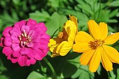 wildflower mix - HBW! (karma (Karen)) Tags: home flowers brightcolors 4summer dof bokeh hbw bokehwednesday cmwd