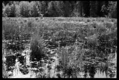2016-07-03-0004 (Cosmic Ray's) Tags: film 35mm nationalpark olympus 35mmfilm wetlands vintagecamera tetons nationalparks olympusom2 grandtetonnationalpark usnationalparks omsystem rockefellerpreserve epsonv600