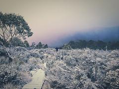 Paul Brandon Overland 2016 (11 of 140) (Paul Brandon  Rambling House Photography) Tags: mountain snow mountains walking nikon rainforest hiking australia tasmania cradle iphone