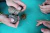 Taller: Una semana en la Prehistoria - Fundación Cerezales