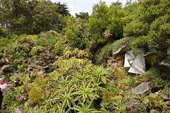 Tresco Abbey Gardens, Isles of Scilly (x70tjw) Tags: gardens tresco islesofscilly