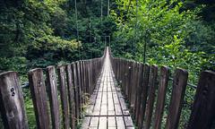 lost in a jungle (Vinzlott) Tags: canyon eau landscape montagne moutain nature paysage riviere savoie water chambéry pont vive canyonnig sport rhonealpes vert green roche