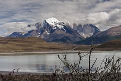 Serie Patagonia (Max Besser Jirkal) Tags: chile patagonia torresdelpaine florayfauna
