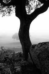 *** (Misha Sokolnikov) Tags: spain fog tree silhouette line blackandwhite leica leicamonochrom leicamm 50mm aposummicron travel noiretblanc blancoynegro espana