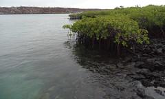 Puerto Ayora Isla Santa Cruz Parque Nacional Galapagos 09 (Rafael Gomez - http://micamara.es) Tags: puerto ayora isla santa cruz parque nacional galapagos ecuador islas