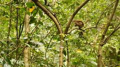 Take a Look (jorfaria) Tags: animal squirrel esquilo mata forest floresta tree rvore verde green natureza nature