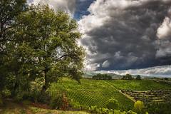 Galatrona - Giornata piovosa (alessio.polloni) Tags: eos eos700d estate pioggia clouds cloud albero tree canon canon700d 1855 toscana collina vigna vigneto valdarno mercatale galatrona hdr