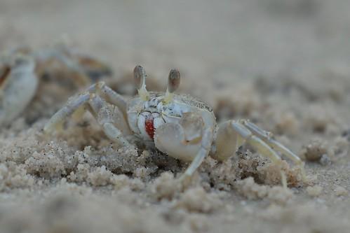 Hua Hin Crab