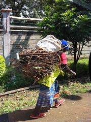 Firewood for the Day I - 5th May 2016 (princetontiger) Tags: kenya nairobi firewood wood burden load woman