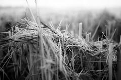 #7948 (UBU ♛) Tags: blancoynegro blackwhite noiretblanc blues biancoenero blutristezza unamusicaintesta landscapeinblues bluubu luciombreepiccolicristalli ©ubu
