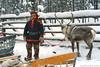 "Reindeer safari (09036) | Saariselkä • <a style=""font-size:0.8em;"" href=""http://www.flickr.com/photos/45797007@N05/15191154353/"" target=""_blank"">View on Flickr</a>"