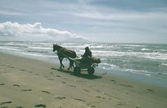 Horse on the beach (megantighe4) Tags: sea italy horse beach landscape island seaside sand italia campania footprints napoli naples ischia procida lagopatria horseonbeach varcaturo campaniaitaly lagopatriaitaly varcaturoitaly