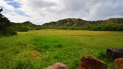 Inside Diamond Head (Edmund Garman) Tags: volcano hawaii oahu head hike diamond hi honolulu edmund tuff garman crator trailhead lahi d7000