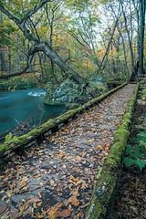 Walkway, Oirase (Oscar Tarneberg) Tags: wood travel japan zeiss canon river moss stream walkway aomori  tohoku oirase   5d3 distagon2128ze