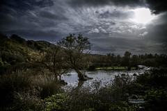 Something is lurking in the swamps... (Vagelis Poulis) Tags: nightphotography trees moon tree mystery night landscape moody nightscape greece swamps swamp moonlight dreamy marsh marshland moodysky epirus