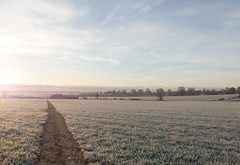 Path (only lines) Tags: uk winter cold field kent path frosty