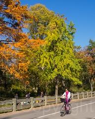 Biking in Central Park, New York City (jag9889) Tags: park nyc newyorkcity autumn usa ny newyork fall colors bike bicycle landscape cycling unitedstates centralpark manhattan unitedstatesofamerica landmark foliage cp 2014 nycparks jag9889 20141110