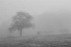 Dans le brouillard. (julie.graph) Tags: autumn shadow blackandwhite nature landscape walnut paysage campagne brouillard noyer