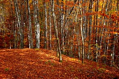 _DSC1151 (andoni.guridi) Tags: autumn fall spain otoño navarra 2014 basaburua