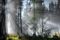 Herbstwald (Klaus Steinert) Tags: autumn trees mist tree fog forest licht alley nebel herbst sunrays academy sonne wald bäume sonnenstrahlen dunst the platinumheartaward theacademytreealley
