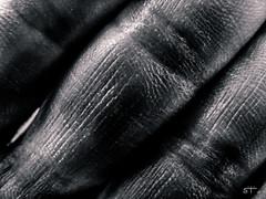 Yo 2 (sbstnhl - Siti) Tags: macro blanco skin sony negro fingers bn dedos piel dsch2
