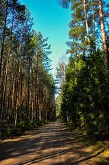 Forest road (Jerome Servais) Tags: road wood tree pine forest tallinn estonia fyr bestonia