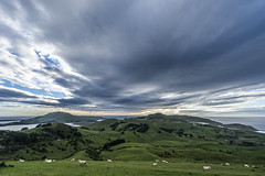 Dull morning (Ian@NZFlickr) Tags: old sky field clouds volcano sheep hills pasture nz otago peninsula