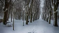 Snowing (malioli) Tags: park snow tree weather canon bench europe croatia snowing cro hrvatska karlovac