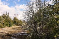 Milford (gabi-h) Tags: trees sky ontario clouds creek landscape dry blackcreek princeedwardcounty gabih