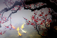 VVF192A2227 (HL's Photo) Tags: fish flower art painting artwork