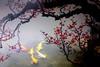 VVF192A2227 (HL's Photo) Tags: fish flower art painting artwork 魚 詩情畫意 攝影畫