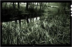 53 Pentax 67 01 (ac | photo) Tags: park winter light white color tree nature monochrome rain landscape pond