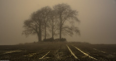 Parallel lines. ( Explored ). (AlbOst) Tags: trees lines misty morninglight explore fields parallellines winterbeauty mistymorning innamoramento