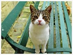 Incontri al parco (Elly212) Tags: park parque parco verde green look cat bench banco gato observe katze gatto parc panchina aperto sitzbank osservare gartenanlage contemplete behalten abservar