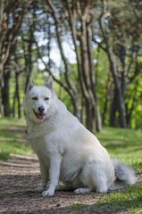DSC_2730 (BearSoHigh) Tags: summer nature animals spring doge
