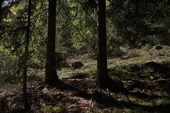Schrambach Wasserfall (inge.sader) Tags: trekking landscape wasserfall sony landschaft trentino sdtirol altoadige brixen mahr adige eisacktal feldthurns schrambach kastanienweg sonyalpha7ii ttschling