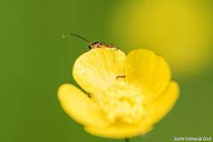 DN9A8638 (Josette Veltman) Tags: macro nature canon bug natuur bugs photowalk lente zwolle landschap insecten ivn westerveldsebos photowalkzwolle