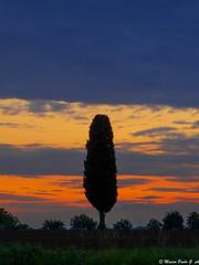 Tramonto, 24/05/2016 (Paolo Gabriele Maiero) Tags: sunset sky plants tree primavera nature clouds spring tramonto nuvole colours natura cielo colori verticale pianteefiori