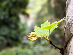 Green Spring (tabatabaie_ehsan) Tags: tree green nature canon leaf spring iran live tehran canon50d