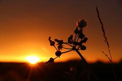 Sommermorgen (ugreeb2002) Tags: nature topf25 germany deutschland sommer feld sonne sonnenaufgang morgensonne naturescenes freinsheim wonderfulworld fantasticnature