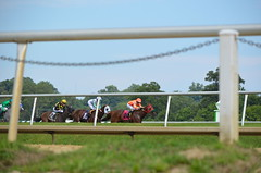 2016-07-15 (40) r3 Jevian Toledo on #8 I. E. Flash (JLeeFleenor) Tags: photos photography md maryland marylandhorseracing outside outdoors jockey   jinete  dokej jocheu  jquei okej kilparatsastaja rennreiter fantino    jokey ngi horses thoroughbreds equine equestrian cheval cavalo cavallo cavall caballo pferd paard perd hevonen hest hestur cal kon konj beygir capall ceffyl cuddy yarraman faras alogo soos kuda uma pfeerd koin    hst     ko
