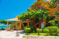 _JAM7419 (Jamil D750) Tags: jamaica smoked marlin sunny ocean beach oceanview view restaurant tropical blue sky waves nikon nikond750 green yellow orange stone