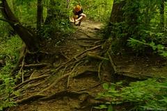 Root Maze (Imagination04) Tags: waterfall glen county forest preserve il illinois dupage tree roots lyndie daniels hdpentaxda1685mmf3556eddcwr pentaxda1685mm pentax1685mm da wr