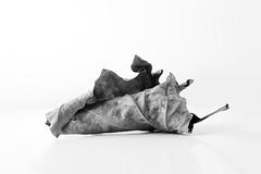 Premires feuilles (celias77) Tags: minimalist highkey