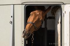 DSC01752_s (AndiP66) Tags: aespli derby hindelbank springen 2016 pferd horse schweiz switzerland kantonbern cantonberne concours wettbewerb horsejumping springreiten pferdespringen equestrian sports pferdesport sport sony sonyalpha 77markii 77ii 77m2 a77ii alpha ilca77m2 slta77ii sony70400mm f456 sony70400mmf456gssmii sal70400g2 andreaspeters bern ch september