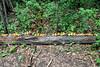 woodland ducks (Mamluke) Tags: art minnesota yellow forest log woods bath midwest small ducks franconia rubber line rubberduck rubberducks linedup bathtoy 2014 funinthesun midwestern franconiasculpturepark mamluke reidsancken