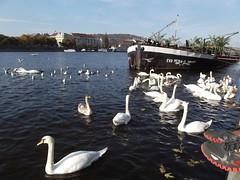 River, boat, birds.. (Ms Kat) Tags: feet river boat prague praha swans vltava mrowrr 312365 naplavka