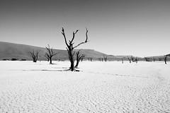 Standing still (mrpase) Tags: africa blackandwhite bw tree blackwhite 1750 namibia lanscape sossusvlei sonyalpha550