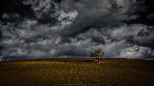 sky sunlight tree field clouds lonely ploughed